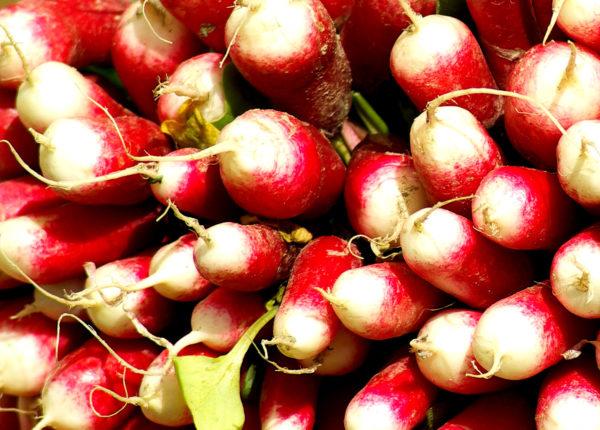 graines-radis