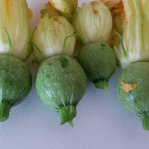 courgette geode fruit