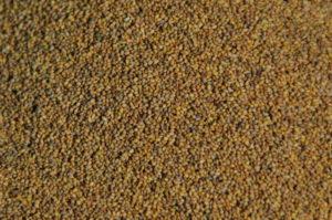 Roquette graines